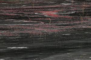 Cranberry bog in winter